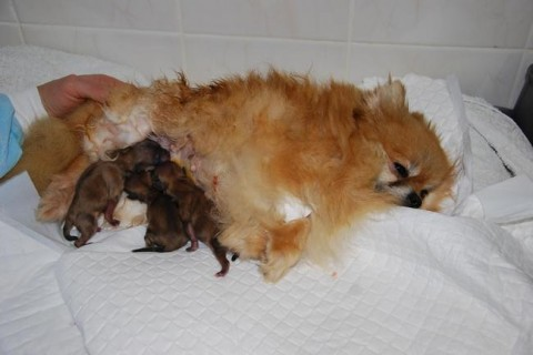 Выезд ветеринара на дом с 10:00 до 20:00