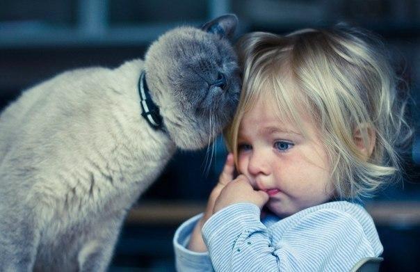 Четвероногий друг для вашего ребенка: заводить или нет?