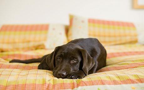 Пес на здоровье: научные аргументы, почему вам надо завести собаку