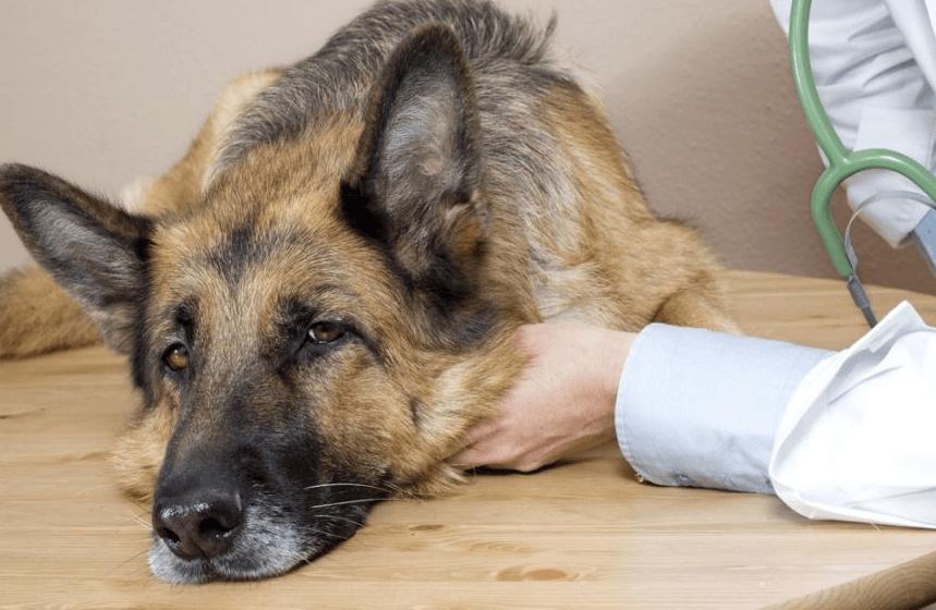 Эпилепсия у собак: причины, признаки и лечение